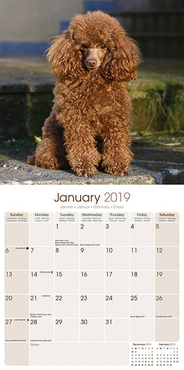 Calendar 2019  Poodle