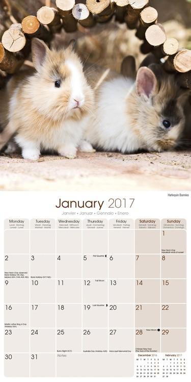 Calendar 2020  Rabbits