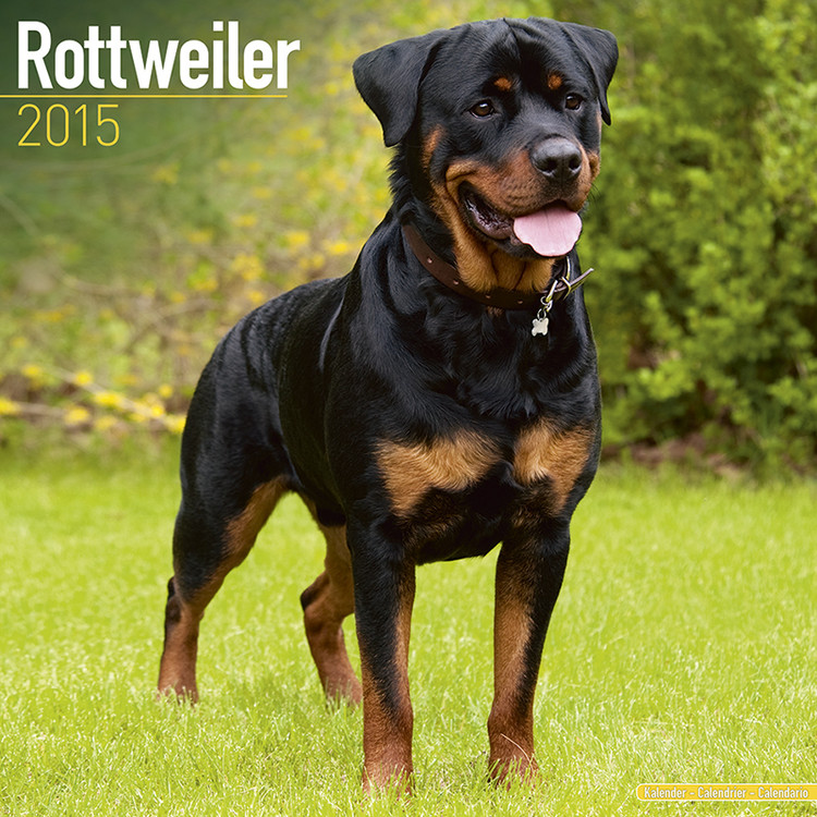 Calendar 2017 Rottweiler