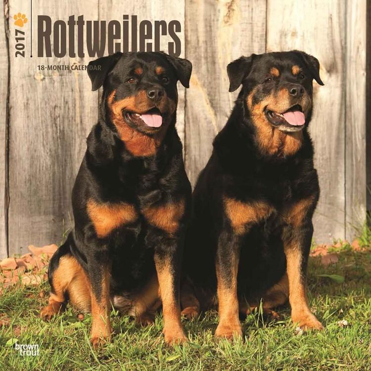 Calendar 2019  Rottweilers