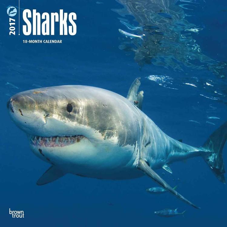 Calendar 2019  Sharks