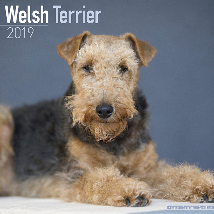 Calendar 2019  Welsh Terrier
