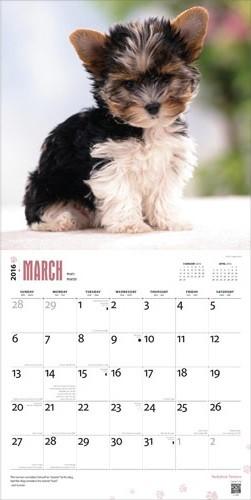 Calendar 2019  Yorkshire Terriers
