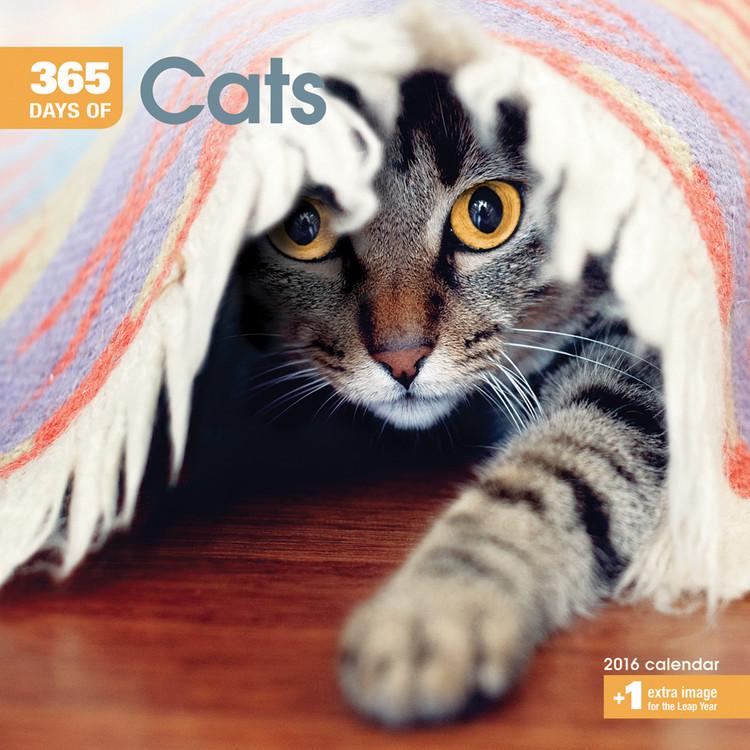 Calendário 2018 Cats