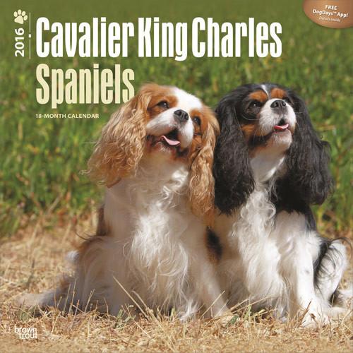 Calendário 2017 Cavalier King Charles Spaniels