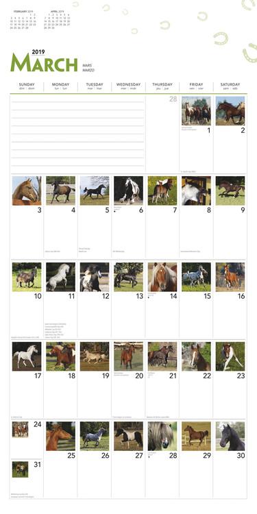 Calendario 365 2020.Calendario 2020 Horses 365 Days Of