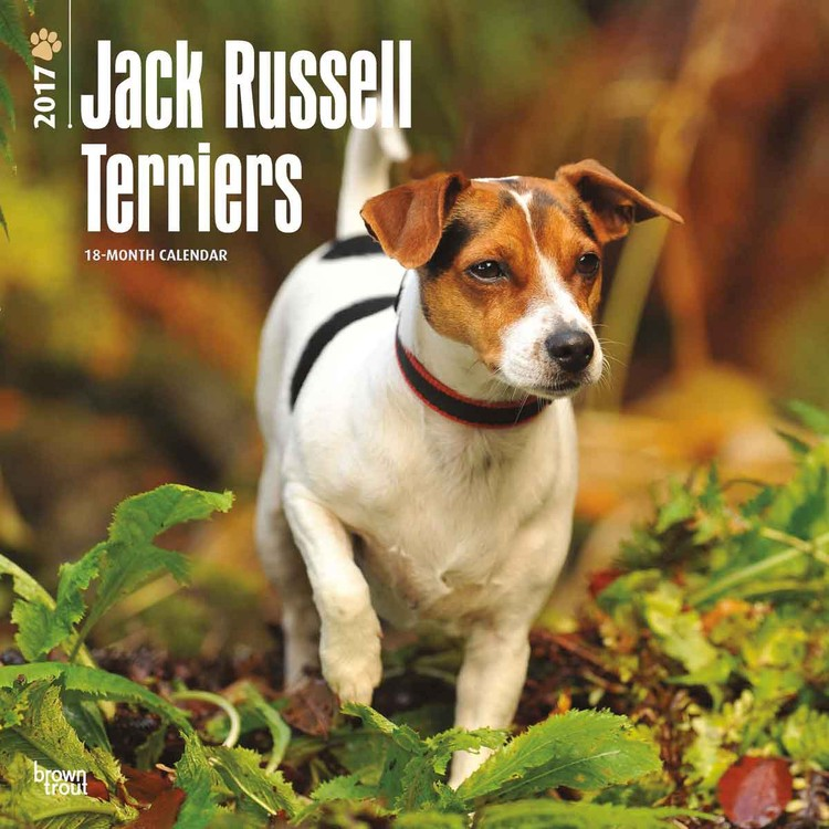 Calendário 2017 Jack Russell Terriers