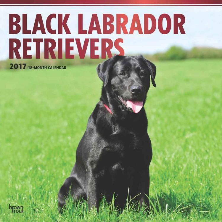 Calendário 2017 Labrador Retriever - Black