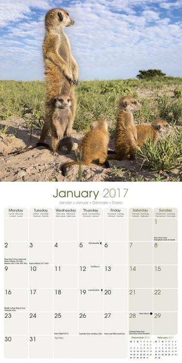 Calendário 2018 Meerkats