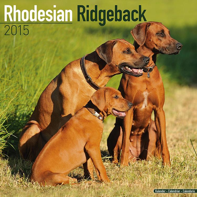 Calendário 2017 Rhodesian Ridgeback