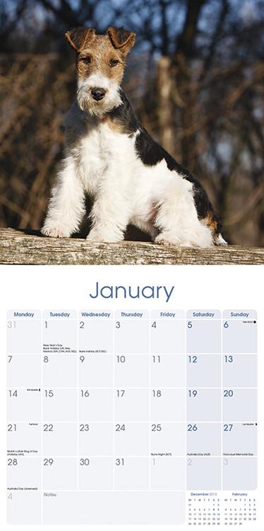 Calendario Fox.Calendario 2020 Wirehaired Fox Terrier