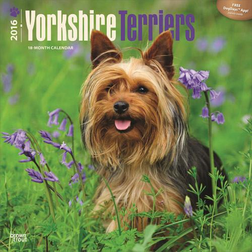 Calendário 2017 Yorkshire Terriers