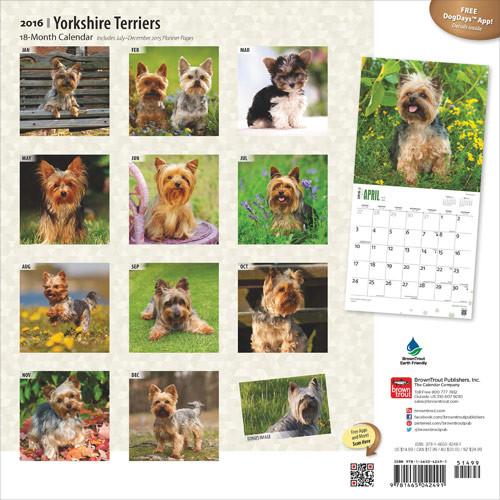 Calendário 2019  Yorkshire Terriers