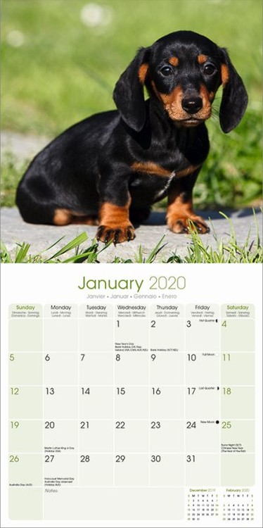 Calendrier Tan 2022 Dachshund   Wall Calendars 2022   Large selection
