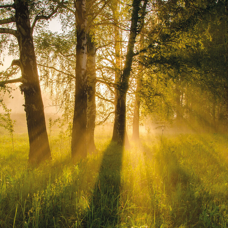 Calendar 2022 Deep Forest