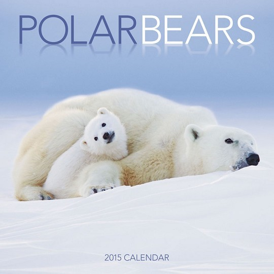 Ours blanc  Calendrier 2017