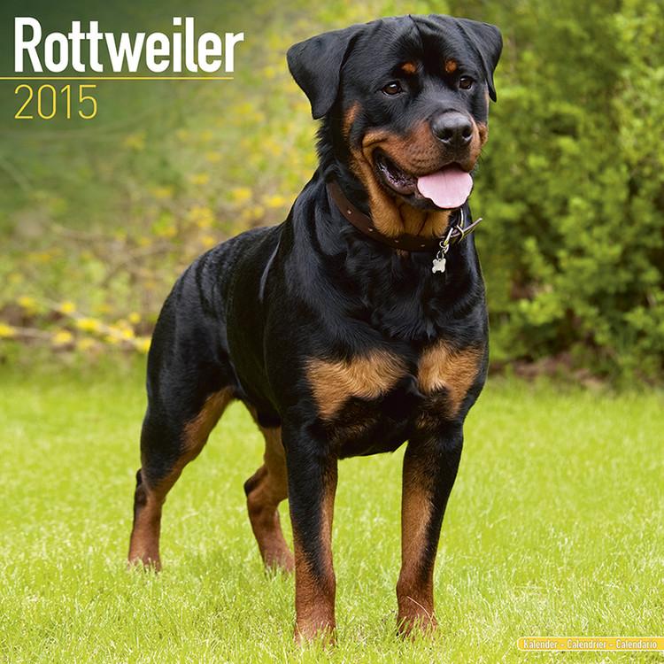 Rottweiler Calendrier 2017