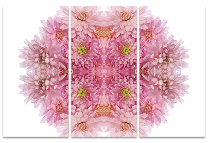 Canvas Print Alyson Fennell - Pink Chrysanthemum Explosion