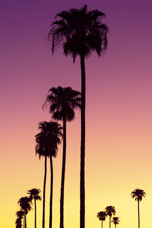 Canvas Print American West - Sunset Palm Trees