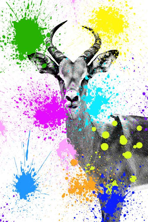 Canvas Print Antelope Reedbuck
