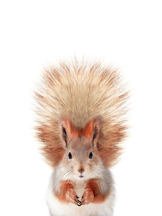 Canvas Print Baby Squirrel