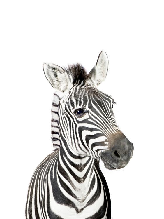 Canvas Print Baby Zebra