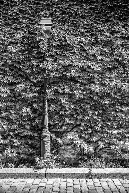 Canvas Print Black Montmartre - Hidden between the Leaves