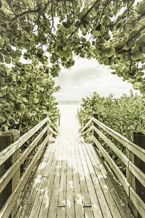 Bridge to the beach with mangroves | Vintage Canvas Print