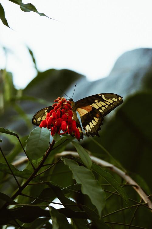 Canvas Print Butterfly feast