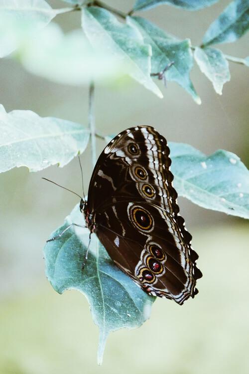 Canvas Print Butterfly portrait