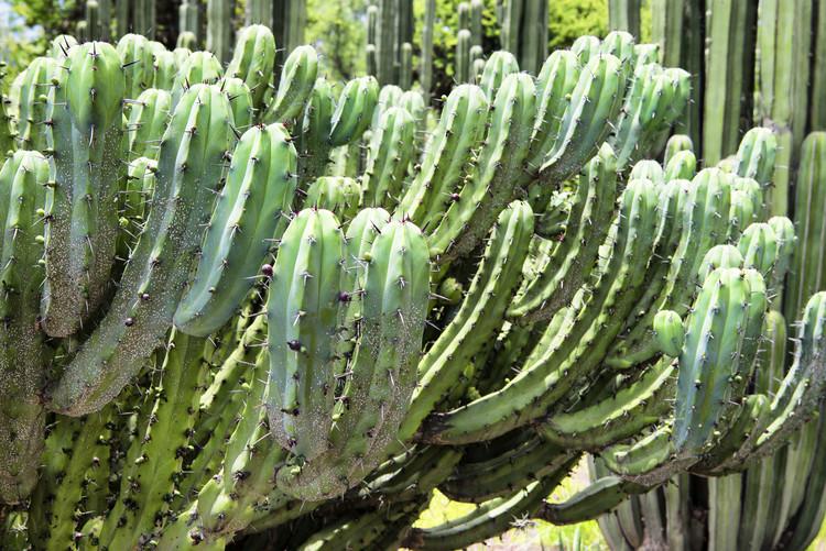 Canvas Print Cactus Details