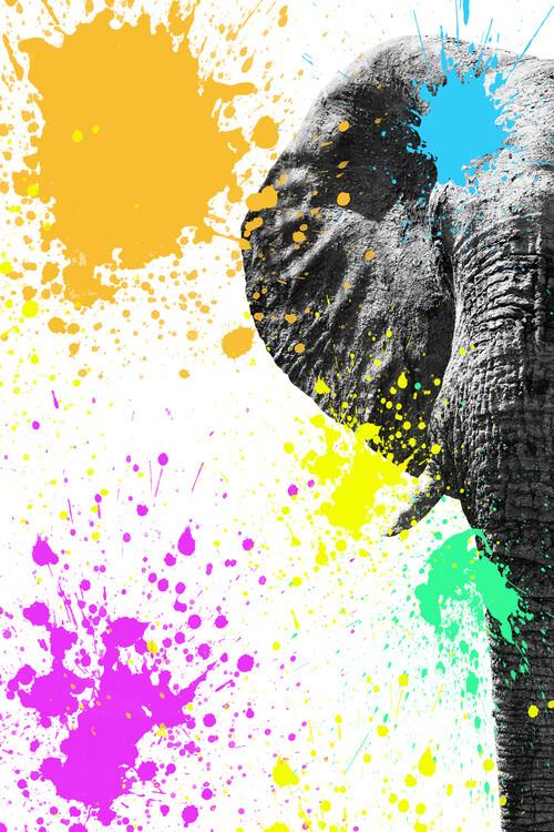 Elephant Portrait II Canvas Print