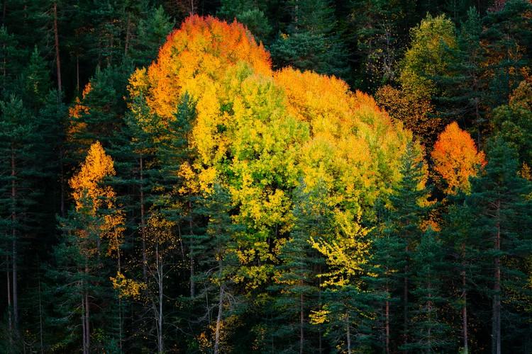Fall colors trees Canvas Print