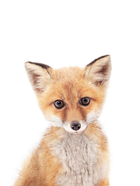 Canvas Print Fox 1