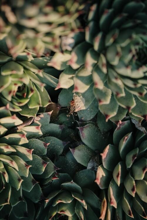 Garden cactus leaves Canvas Print