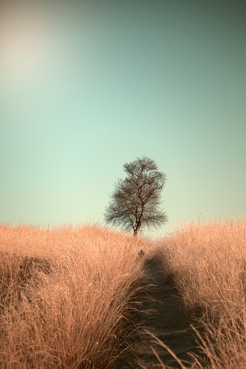 Canvas Print Grass and Path