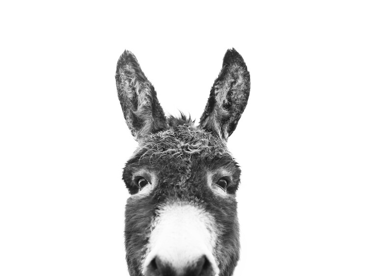 Hello donkey Canvas Print