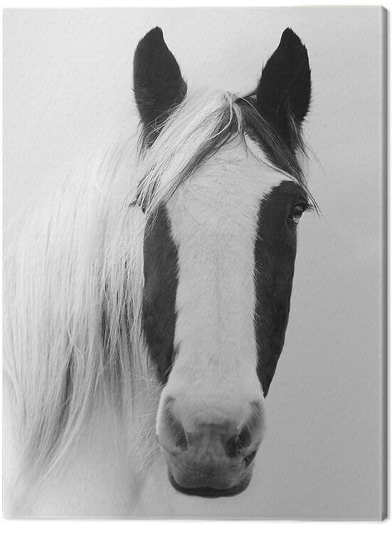 Canvas Print Ian Winstanley - Nordic Horse I