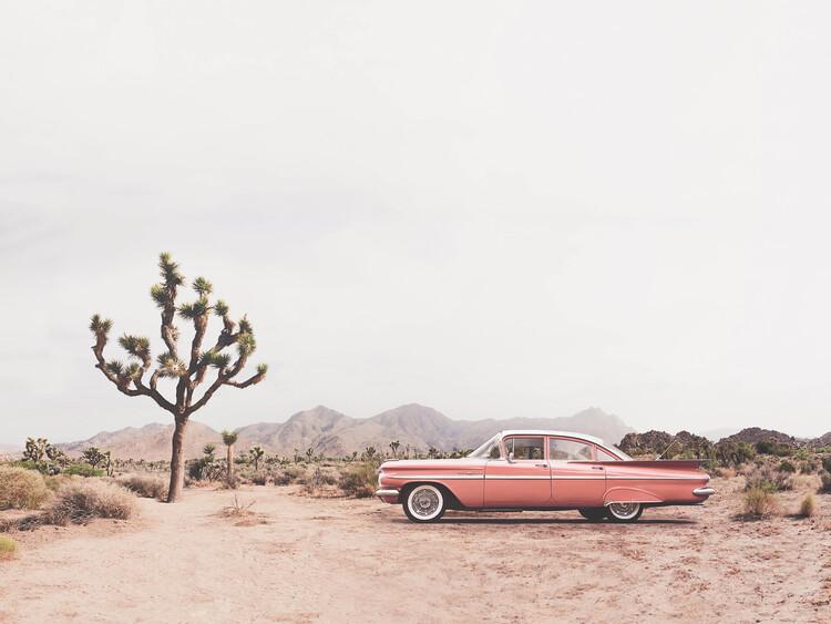 Canvas Print In the desert