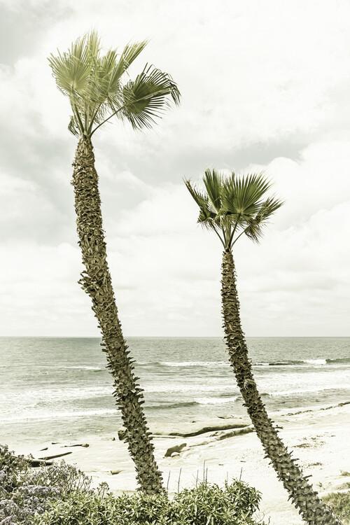 La Jolla palm trees | Vintage Canvas Print