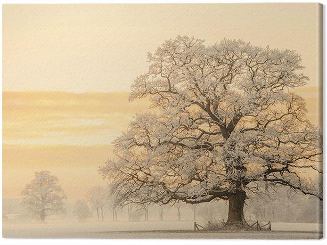 Canvas Print Lars Van De Goor - Winter Light