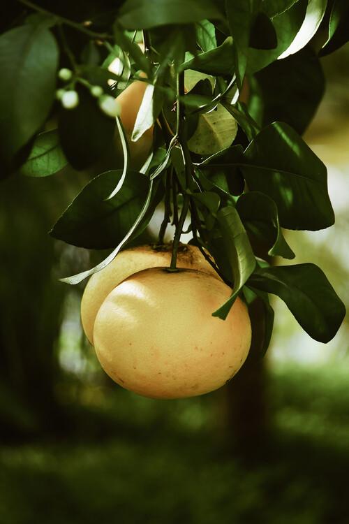 Canvas Print Lemontree
