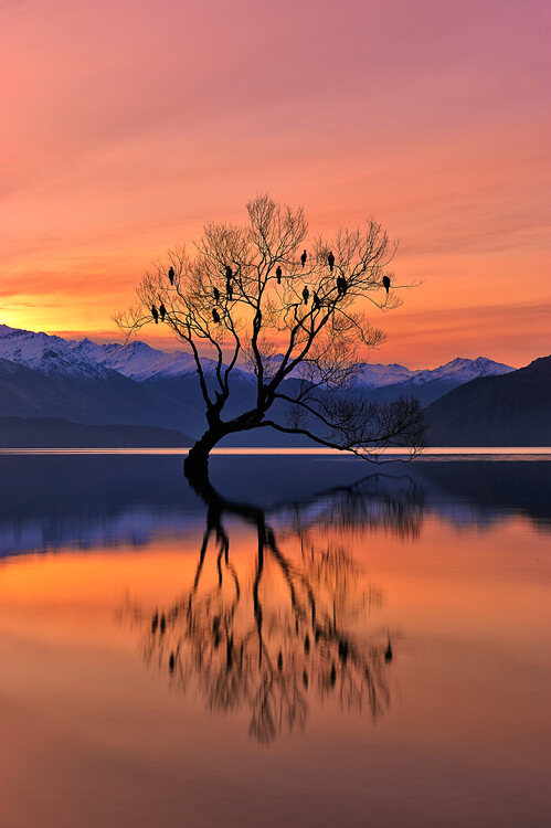 Canvas Print Lone Tree is not Lonely