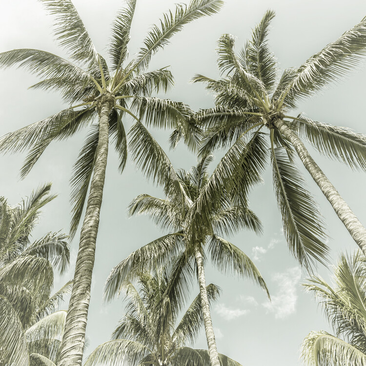 Lovely Vintage Palm Trees Canvas Print