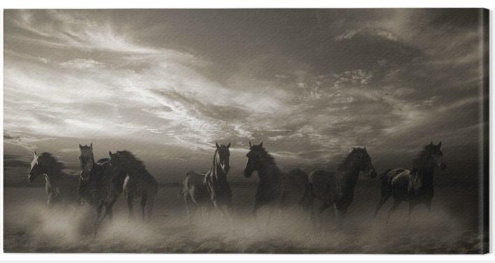 Canvas Print Malcolm Sanders - Wild Stampede