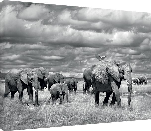 Canvas Print Marina Cano - Elephants of Kenya