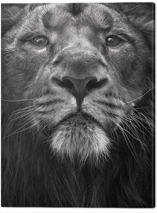 Canvas Print Marina Cano - The King