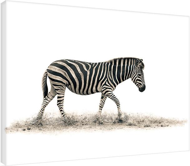 Canvas Print Mario Moreno - The Zebra