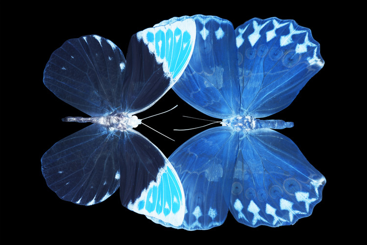 Canvas Print MISS BUTTERFLY DUO FORMOIA - X-RAY Black Edition