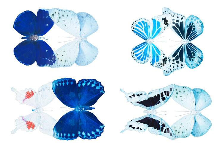 Canvas Print MISS BUTTERFLY X-RAY DUO White